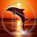 Lg - Delfiny - Kolorowa tapeta nr 2367259