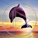 Lg - Delfiny - Kolorowa tapeta nr 2527263