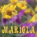 Motorola - Nowości - Moja tapeta nr 2953767
