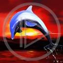 Lg - Delfiny - Kolorowa tapeta nr 3450433