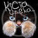 Lg - Koty - Kolorowa tapeta nr 3563767