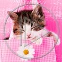Lg - Koty - Kolorowa tapeta nr 3595086
