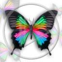 Motylek MMS